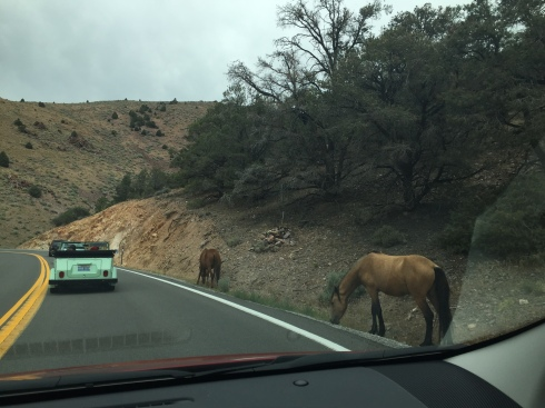 Wild horses driving back from Virginia City